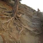 на Тропе Голицына фото дерева