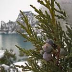 Зимнии фото Нового Света