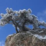Обледеневшее дерево