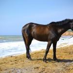Конь на берегу