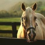 Лошадка в стойле