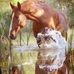 Конь в воде