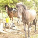 Привал в горах с лошадьми