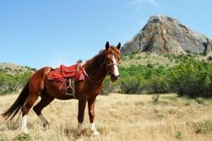 Прогулки в Судаке по горам на лошади