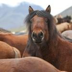 Конные прогулки в Судаке по горам