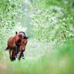 Лошади в лесу