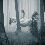 Таинственный лес лошадь в тумане