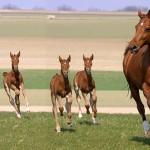 Лошад и дети