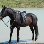 Лошадь возле озера