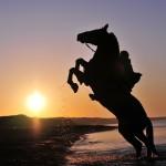 На море лошадь