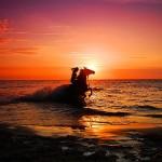 С лошадью в море