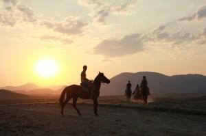 Катание на лошадях Судак Мегному