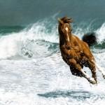 Конь на море
