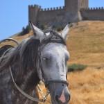 Лошадь в Судаке